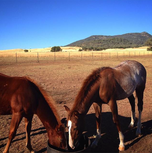 Working on a horse farm is a great way to get your second year visa